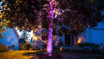 Фито - подсветка растений
