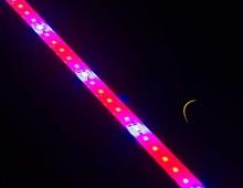 Светодиодный фито-светильник SMD 5630