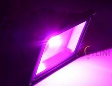 Светодиодный фито прожектор 50W для растений